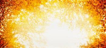 Schönes buntes Herbstlaub im Garten oder im Park, unscharfer Naturhintergrund, Fahne Stockbild