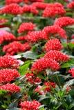 Schönes Detail von roten Blüten in landschaftlich gestaltetem Garten stockfotografie