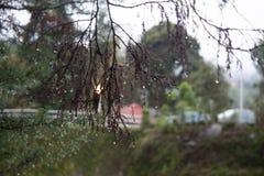 Schönes erstaunliches und unterschiedliches Tropfenwasser im Blattbaum in Colonia tovar; s-Stadt Venezuela lizenzfreie stockfotografie