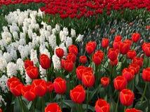 Schönes Feld der Blumen Stockbild
