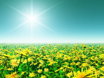 Schönes Feld der bunten Blumen Stockfoto