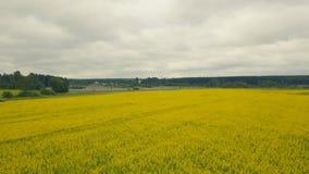 Schönes Feld der gelben Blumen des Sommers Flächenansichtsommer-Feldblumen stockfotografie