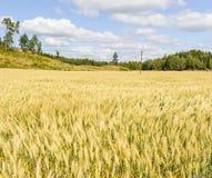 Schönes Feld an einem Sommer-Tag Lizenzfreie Stockfotografie