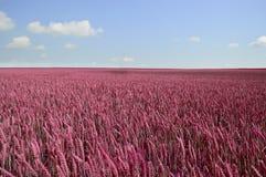 Schönes Feld mit den Ährchen des Weizens lizenzfreies stockbild