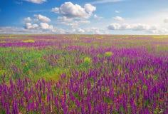 Schönes Feld mit violetten Blumen, roten Mohnblumen und bewölktem Himmel Lizenzfreie Stockfotos