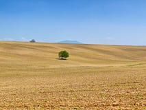 Schönes Feld und blauer Himmel Lizenzfreies Stockfoto