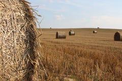 Schönes Feld von Weißrussland stockfoto