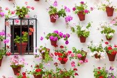 Schönes Fenster und Wand verzierten Blumen - alte europäische Stadt, stockbild