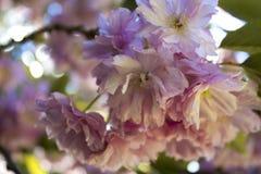 Schönes flowershot Stockfotografie