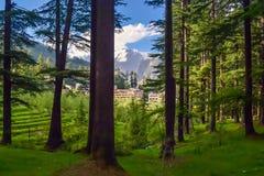Schönes forrest im Himalaja stockfoto