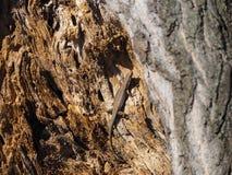 Schönes Foto der Eidechse im Baum Stockfotos