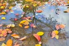 Schönes Foto des goldenen Gelbs des Herbstes verlässt auf Wasseroberflächenreflexion stockfotografie