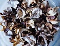 Schönes Foto des toten trockenen Blattdekors Stockbilder