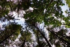 Schönes Foto eines alten sonnigen Waldes Lizenzfreie Stockbilder