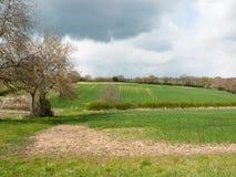 Schönes Frühlingsfeldwiesenbaum-Himmelackerland des äußeren Landes stockfoto