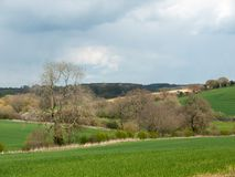 Schönes Frühlingsfeldwiesenbaum-Himmelackerland des äußeren Landes lizenzfreie stockfotografie