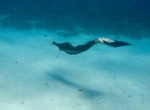 Schönes freediver Mädchen schwimmt entlang Seunterseite Lizenzfreie Stockfotos