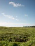 Schönes frisch bebautes Feld der grünen Ernte Lizenzfreie Stockfotografie