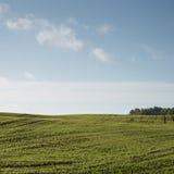 Schönes frisch bebautes Feld der grünen Ernte Stockbilder