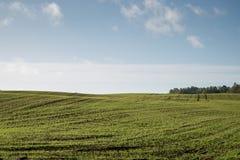 Schönes frisch bebautes Feld der grünen Ernte Lizenzfreie Stockfotos