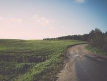 Schönes frisch bebautes Feld der grünen Ernte Lizenzfreies Stockfoto