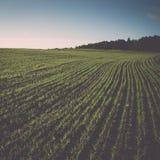 Schönes frisch bebautes Feld der grünen Ernte weinlese Lizenzfreie Stockfotos