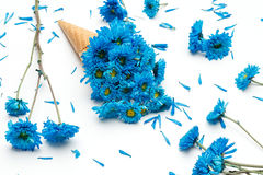 Schönes frisches der blauen Chrysanthemeneistüte-Blume lizenzfreie stockbilder