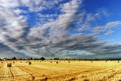 Schönes gelbes Feld mit Heuschobern bei Sonnenuntergang stockbilder