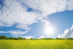 Schönes gelbes Feld und blauer Himmel der Wolken Stockbild