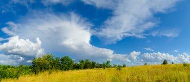 Schönes gelbes Feld und grüner Wald unter drastischem Himmel Stockfotografie