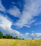 Schönes gelbes Feld und grüner Wald unter drastischem Himmel Lizenzfreies Stockfoto