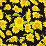 Schönes gelbes Sonnenblumenhintergrundmuster Stockbilder