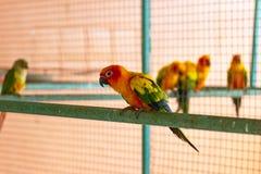 Schönes Gelbes und ein orange Papagei in einem Käfig am Park stockbild