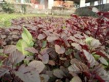 Schönes Gemüse Stockfotos