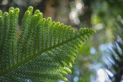 Schönes geschnitztes grünes Blatt lizenzfreies stockbild