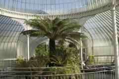 Schönes Gewächshaus in Glasgow Botanic Gardens Lizenzfreie Stockfotografie
