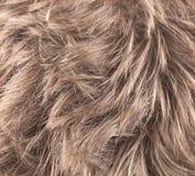 Schönes glänzendes blondes Haar Stockfotos