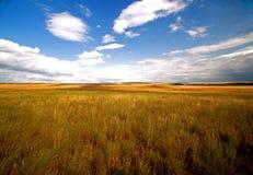 Schönes goldenes Feld Stockfoto