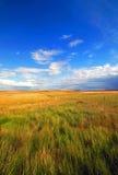 Schönes goldenes Feld mit blauem Himmel Lizenzfreie Stockfotos