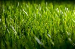 Schönes grünes Abendgras Stockfoto