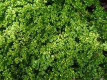 Schönes grünes Blatt Stockfoto