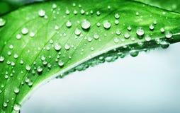 Schönes grünes Blatt Stockfotos
