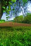 Schönes grünes Feld Stockfoto