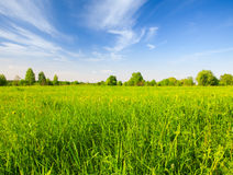 Schönes grünes Feld stockfotografie