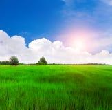Schönes grünes Feld lizenzfreies stockbild