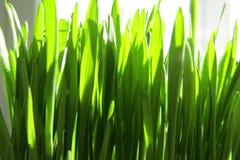 Schönes grünes frisches Gras Stockbild