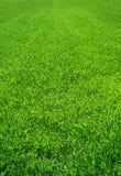 Schönes grünes Gras stockfotografie