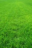 Schönes grünes Gras lizenzfreie stockfotografie