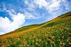 Schönes grünes Gras und gelbe Blumen Lizenzfreie Stockfotos