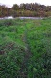 Schönes grünes Gras und Himmel am Abend Lizenzfreies Stockbild